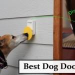 Best Dog Doorbells